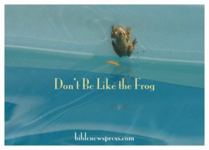 Don't Be Like the Frog